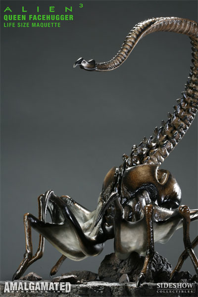 QUEEN FACEHUGGER LIFE SIZE – ALIEN 3 – SIDESHOW COLLECTIBLES