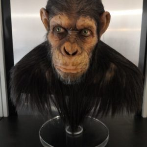 Caesar Life size Bust 1/1 - La planète des singes : Les Origines - Max Roudaut et JP Reuchet